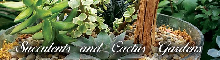 Succulent & Cactus Gardens